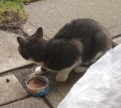 cat found in St Leonard