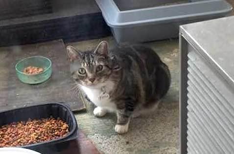 cat found in St Lin