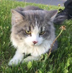 cat found Ste Dorothee gw