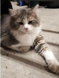 cat found in Ste Julie