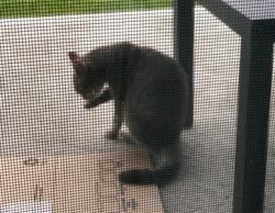 cat found in Terrebonne