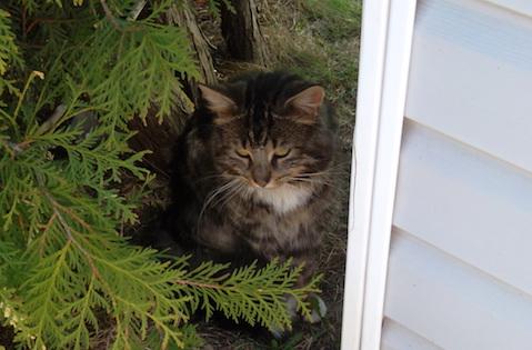 cat found Terrebonne