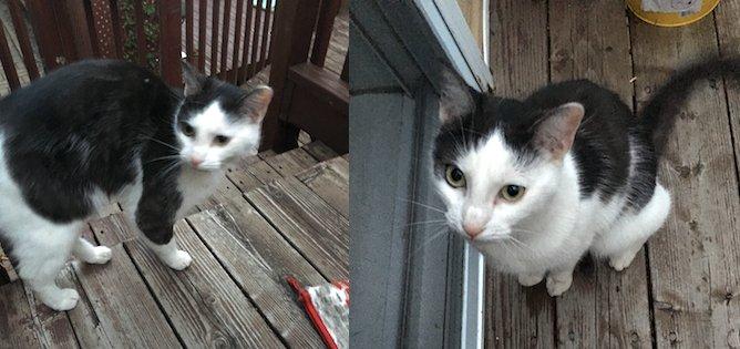 cat found in Terrebonnne