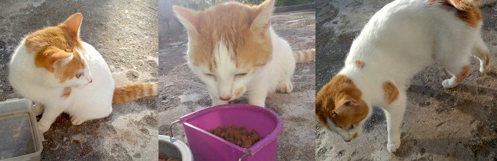 cat found in Val David