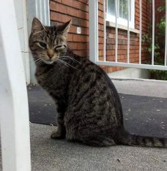 cat found in Ville Emard