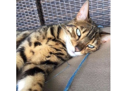 cat lost Assomption