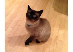 cat lost Hudson tonk