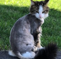cat lost Oka