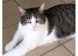 cat lost in St Emile
