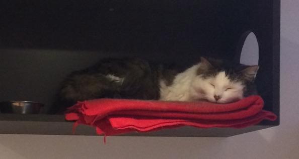 cat lost in Ste Rose