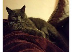 cat lost in Verdun