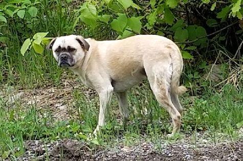 dog found in Grenville