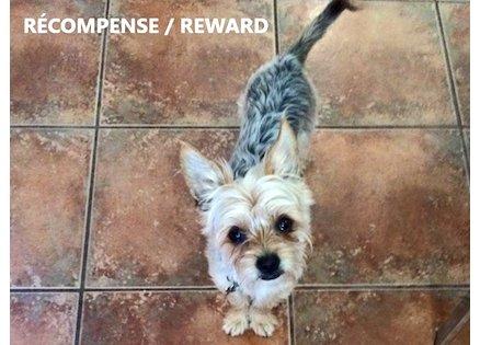 dog lost Villeray mork
