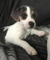 dog stolen Rawdon
