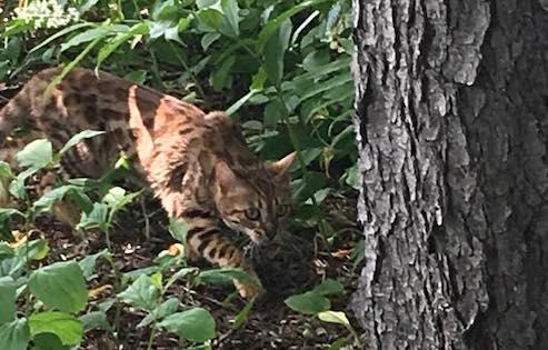 cat found Hudson
