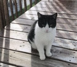 cat found in Laplaine
