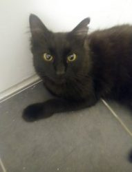 cat found NDG blk