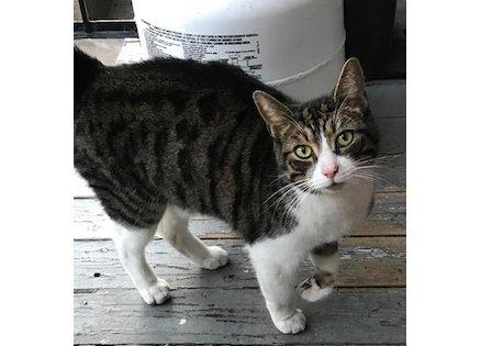 cat found in PAT