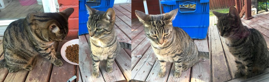 cat found in Verdun