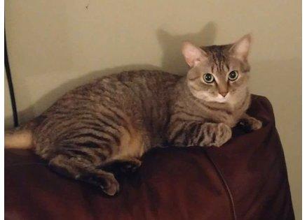 cat lost in Anjou