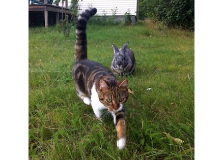 cat lost in Mirabel