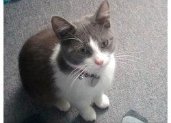 cat lost in St Jerome
