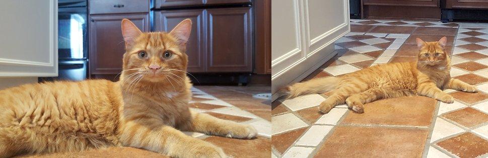 cat lost Vimont