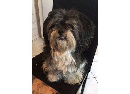 dog found in Montreal North