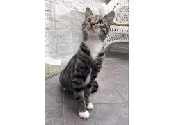 kitten found in St Leonard