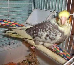 bird lost Valleyfield