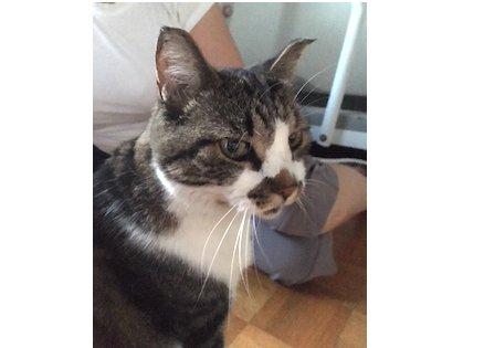 cat found Hochelaga