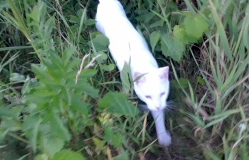 cat found in Lery