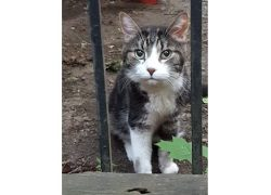 cat found Outremont tw