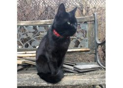 cat lost Hochelaga
