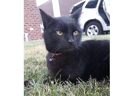 cat lost Ile-Bizard blk