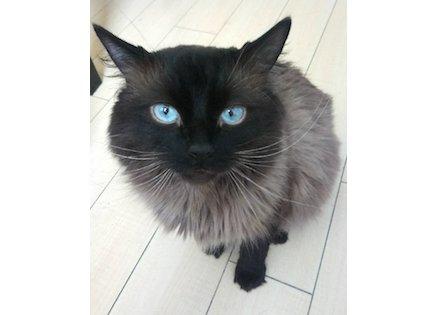 cat lost St Hubert