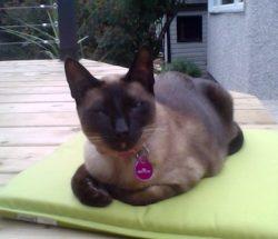 cat lost Terrebonne