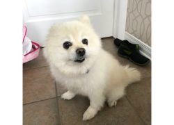 dog found Chambly esk