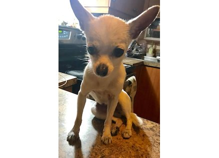 dog found in St Leonard