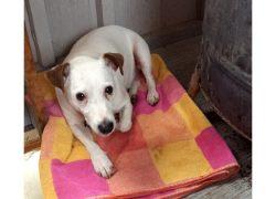 dog lost St Hubert