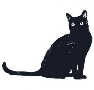 Found Cats – Petluck ca