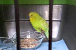 Found Birds – Petluck ca