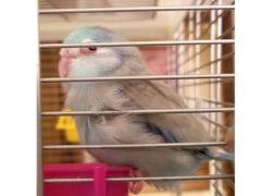 Lost Birds – Petluck ca